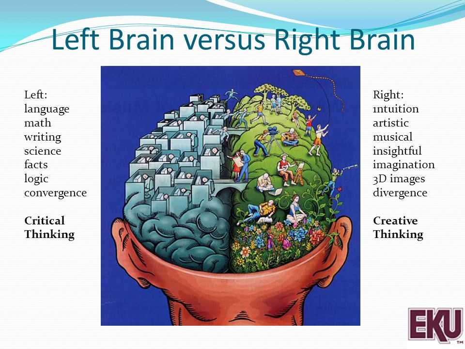 Left Brain versus Right Brain Left: language math writing science facts logic convergence Critical Thinking Right: 1ntuition artistic musical insightf