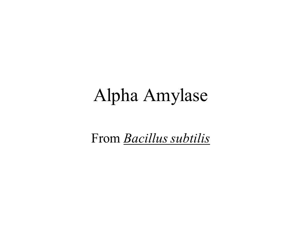 Alpha Amylase From Bacillus subtilis