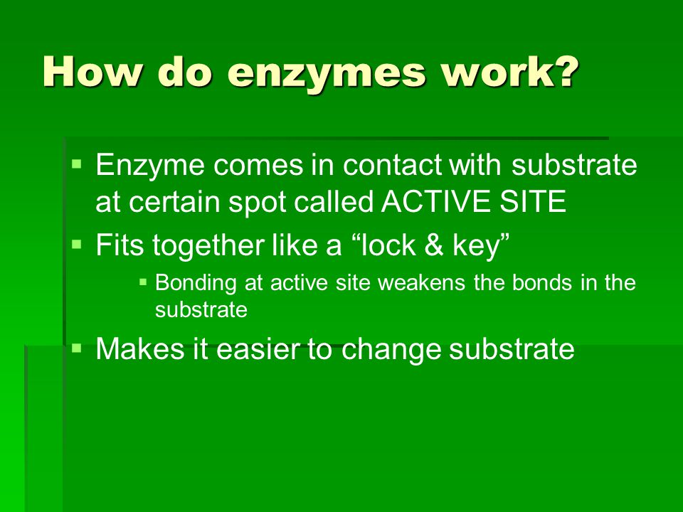 "How do enzymes work?   Enzyme comes in contact with substrate at certain spot called ACTIVE SITE   Fits together like a ""lock & key""   Bonding a"