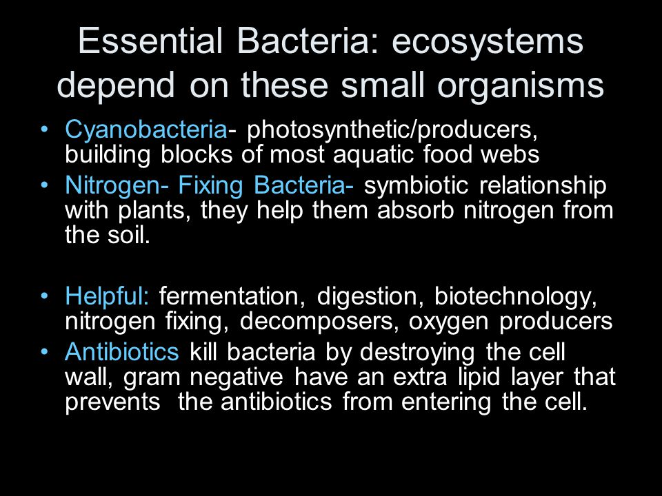 Essential Bacteria: ecosystems depend on these small organisms Cyanobacteria- photosynthetic/producers, building blocks of most aquatic food webs Nitr