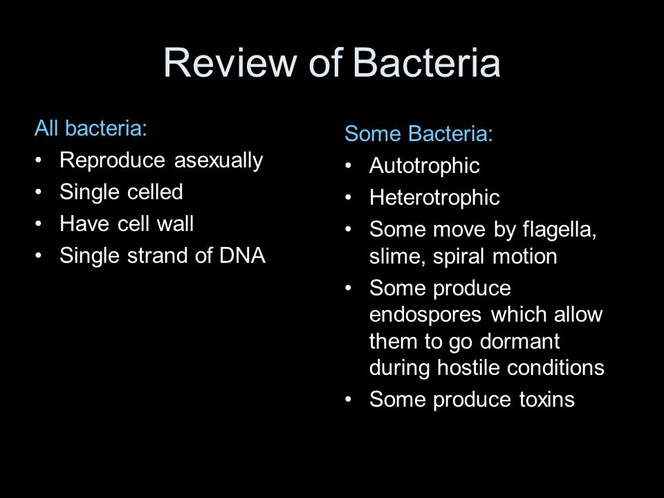 Review of Bacteria All bacteria: Reproduce asexually Single celled Have cell wall Single strand of DNA Some Bacteria: Autotrophic Heterotrophic Some m