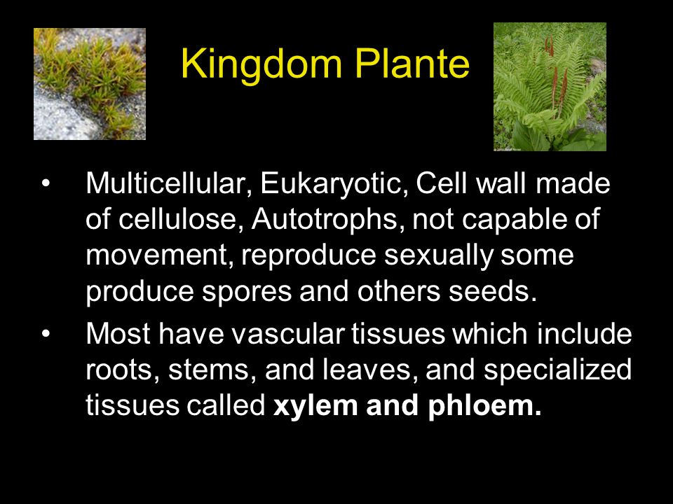 Kingdom Plante Multicellular, Eukaryotic, Cell wall made of cellulose, Autotrophs, not capable of movement, reproduce sexually some produce spores and