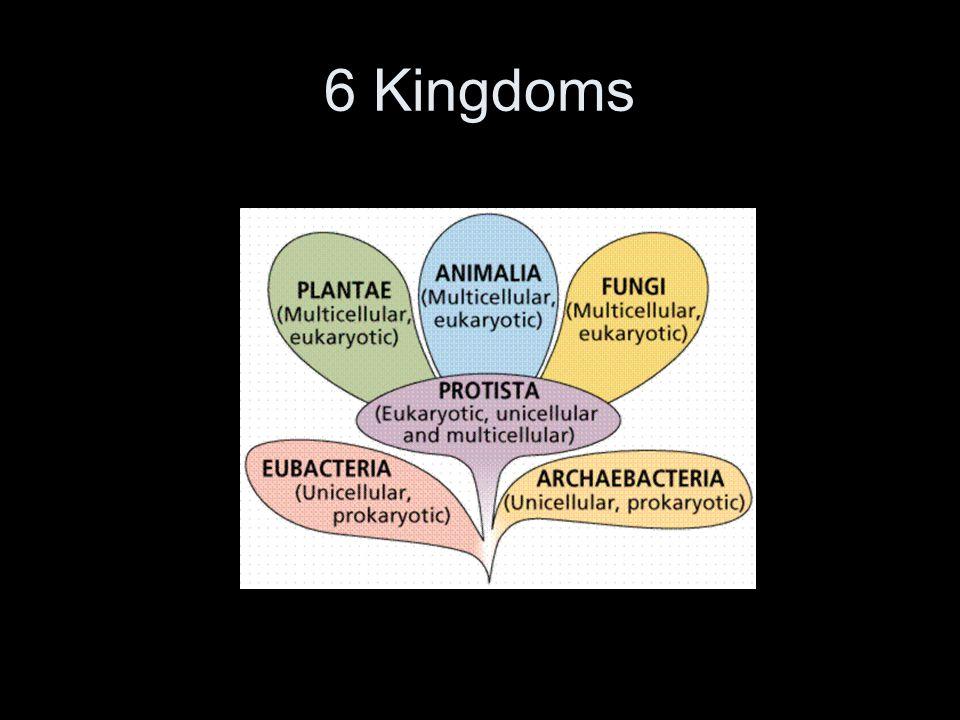 Archea and Eubacteria Archea Kingdom All prokaryotic single celled organisms.