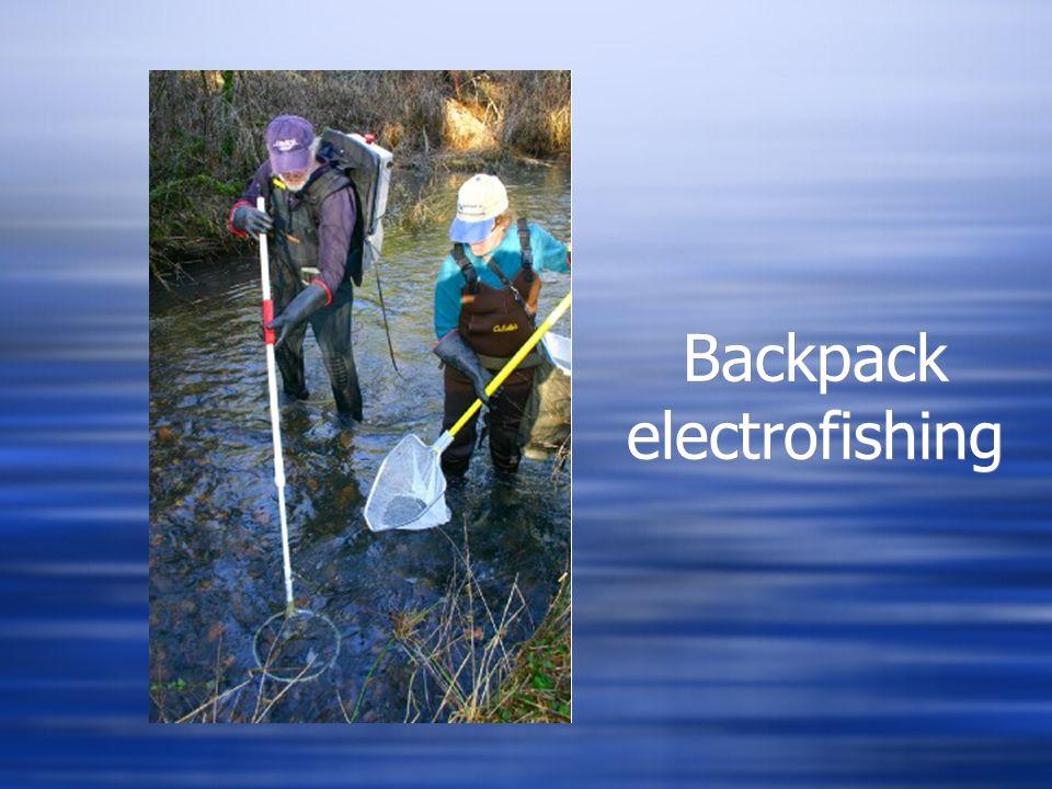 Backpack electrofishing