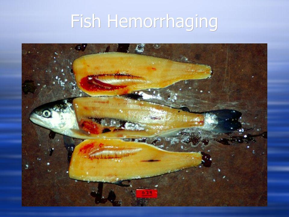 Level Two Level Three Fish Hemorrhaging