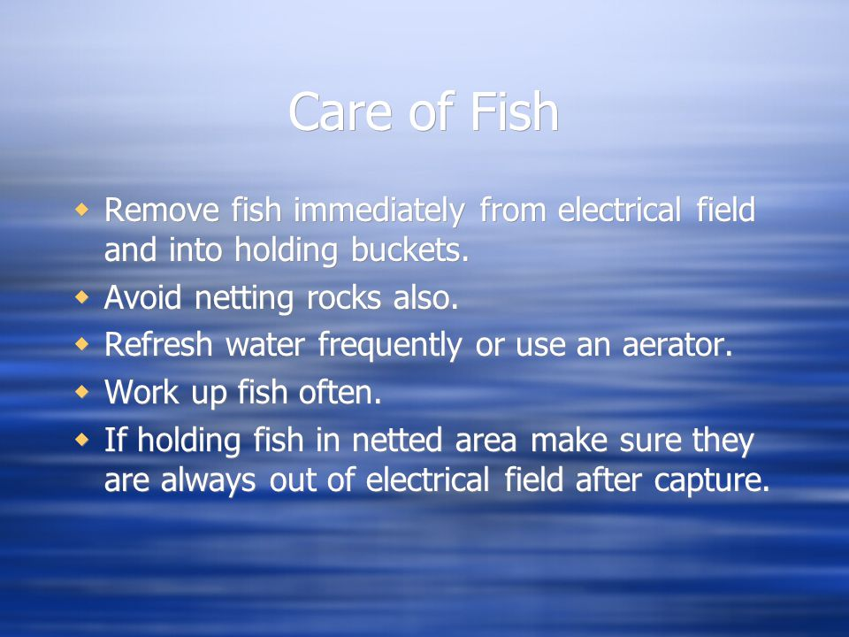 Care of Fish  Remove fish immediately from electrical field and into holding buckets.  Avoid netting rocks also.  Refresh water frequently or use a
