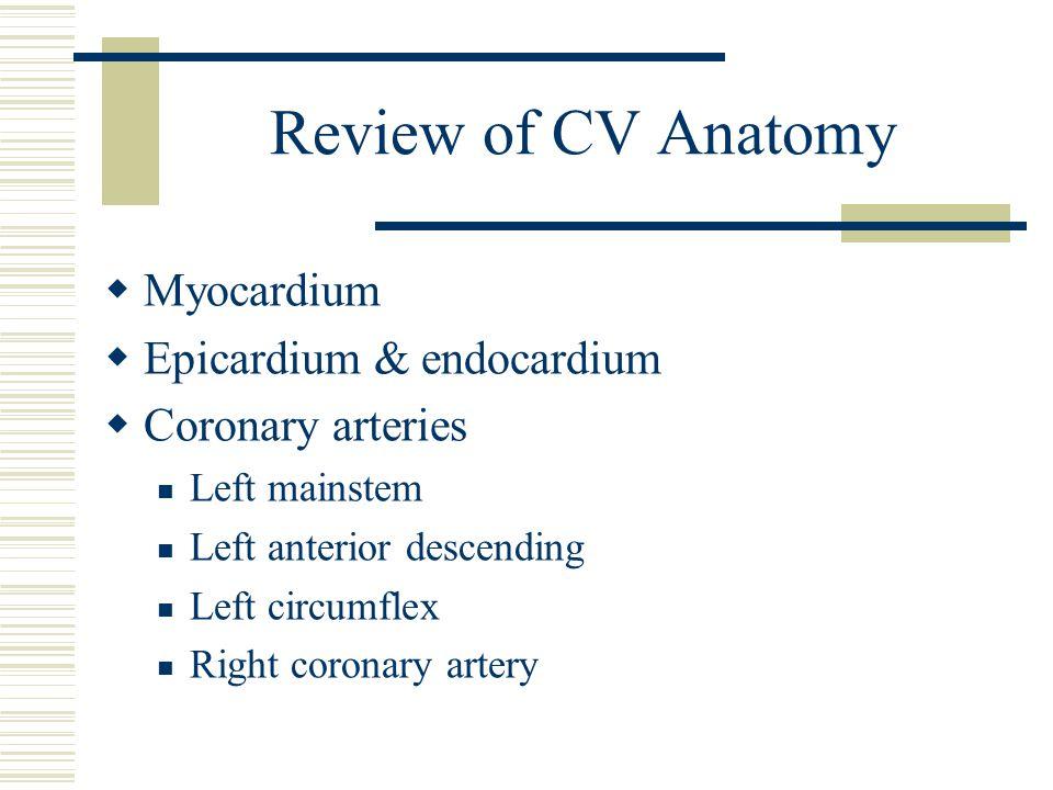 Review of CV Anatomy  Myocardium  Epicardium & endocardium  Coronary arteries Left mainstem Left anterior descending Left circumflex Right coronary
