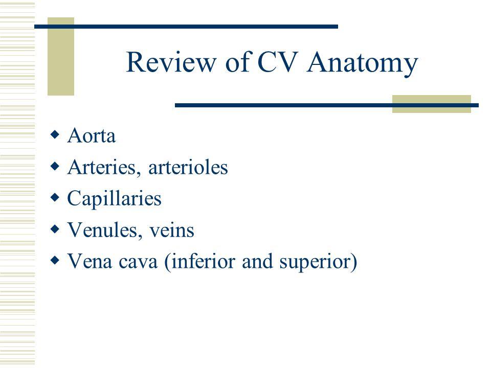 Review of CV Anatomy  Aorta  Arteries, arterioles  Capillaries  Venules, veins  Vena cava (inferior and superior)
