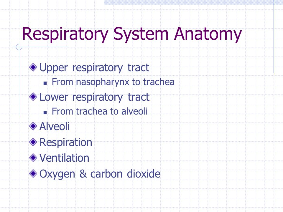 Respiratory System Anatomy Upper respiratory tract From nasopharynx to trachea Lower respiratory tract From trachea to alveoli Alveoli Respiration Ven