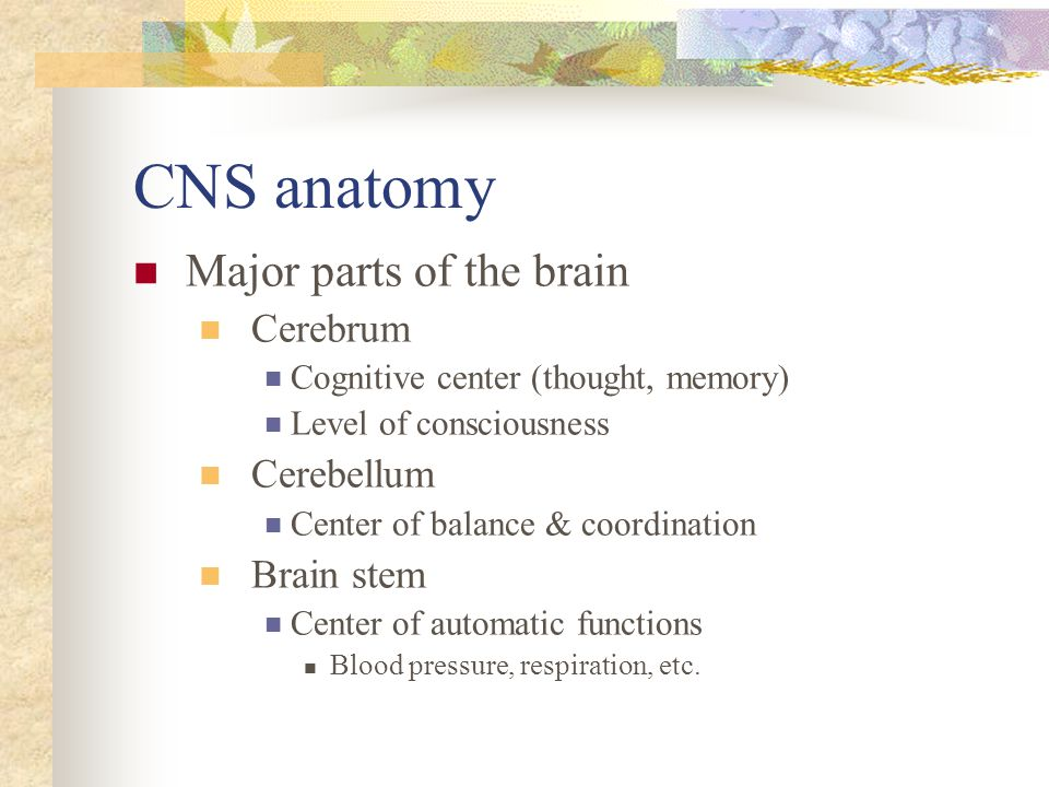 CNS anatomy Major parts of the brain Cerebrum Cognitive center (thought, memory) Level of consciousness Cerebellum Center of balance & coordination Br