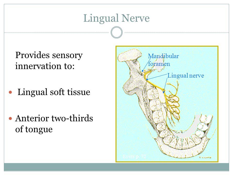 Evers, p. 71 Mental foramen Mandibular foramen Inferior Alveolar Nerve Provides sensory innervation to: Lower teeth on one side Buccal bone from premo