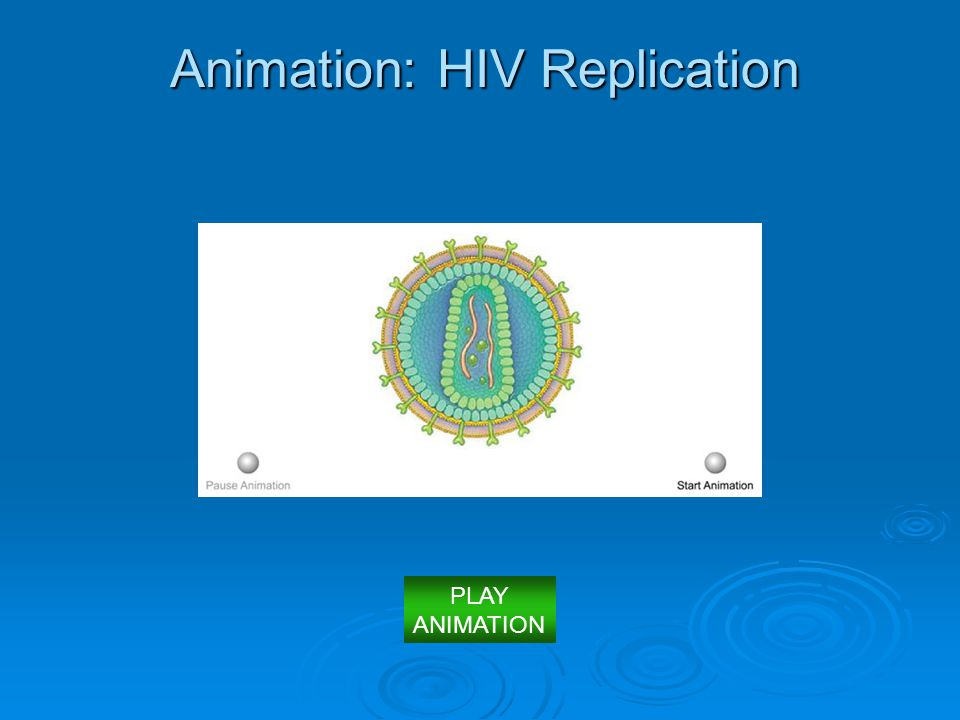 Animation: HIV Replication PLAY ANIMATION