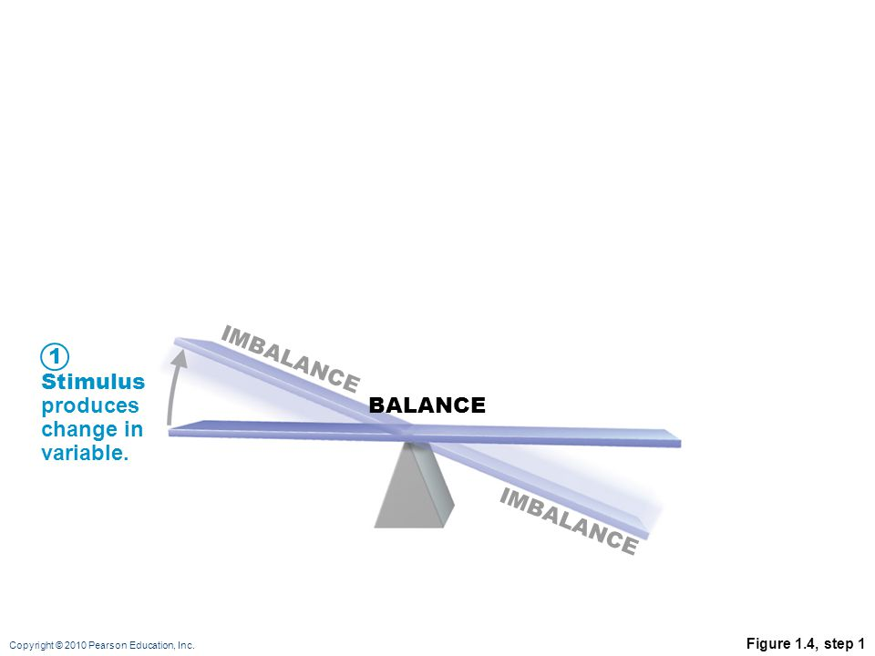 Copyright © 2010 Pearson Education, Inc. Stimulus produces change in variable. BALANCE IMBALANCE 1 Figure 1.4, step 1