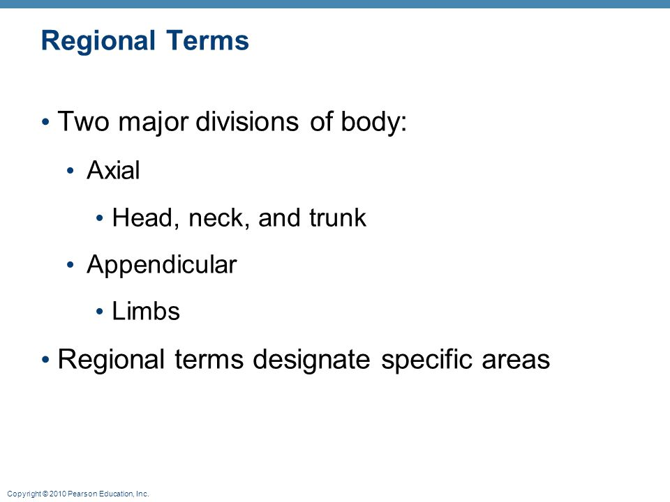 Copyright © 2010 Pearson Education, Inc. Regional Terms Two major divisions of body: Axial Head, neck, and trunk Appendicular Limbs Regional terms des