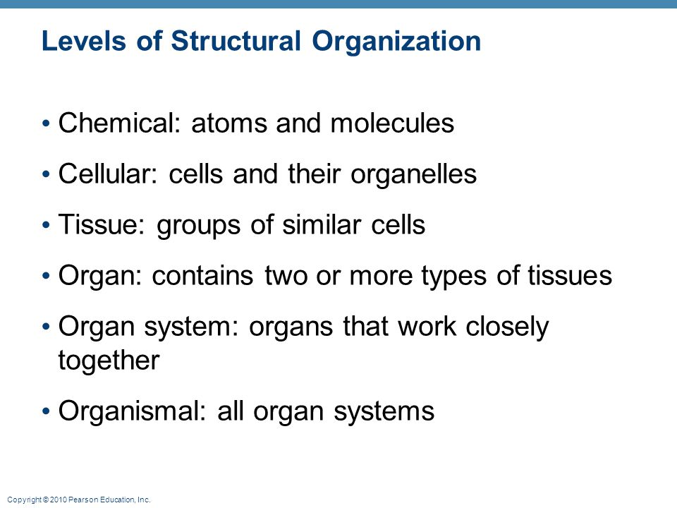 Copyright © 2010 Pearson Education, Inc. Levels of Structural Organization Chemical: atoms and molecules Cellular: cells and their organelles Tissue: