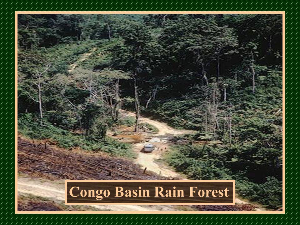 Congo Basin Rain Forest