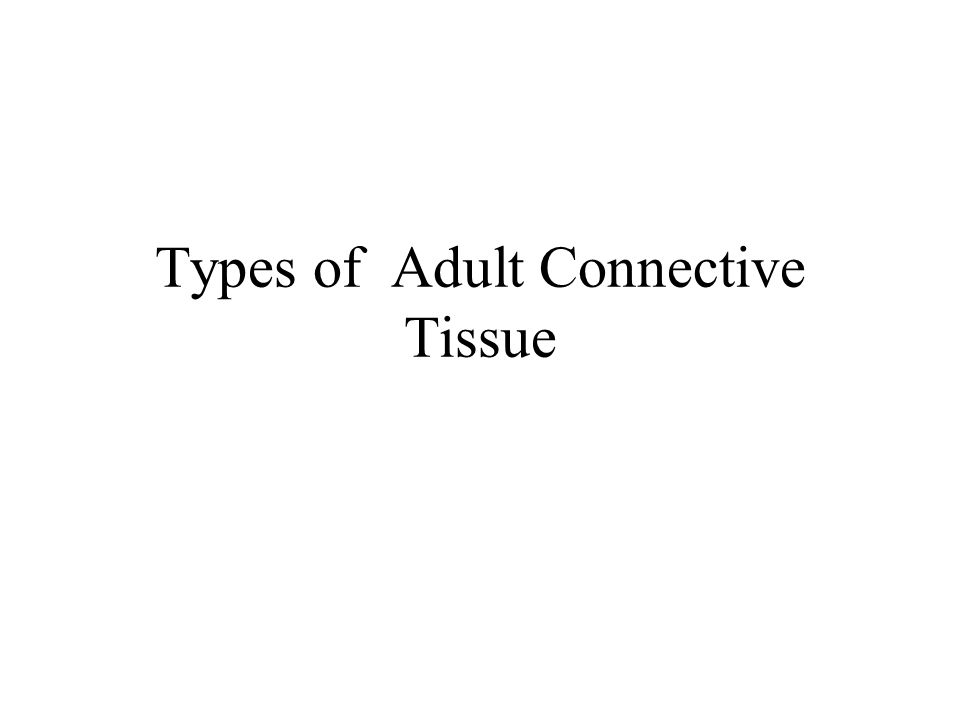 Types of Adult Connective Tissue