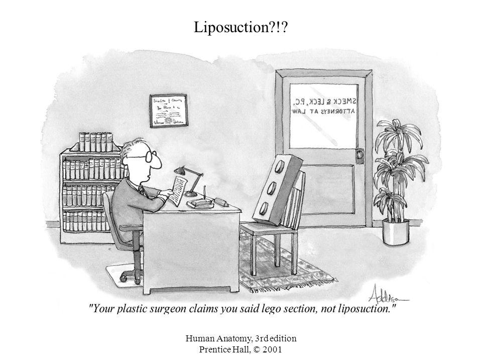Human Anatomy, 3rd edition Prentice Hall, © 2001 Liposuction?!?