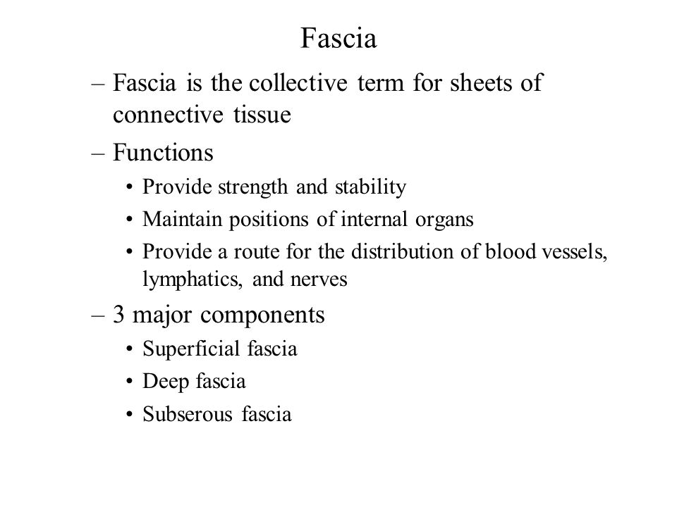 Fascia –Fascia is the collective term for sheets of connective tissue –Functions Provide strength and stability Maintain positions of internal organs