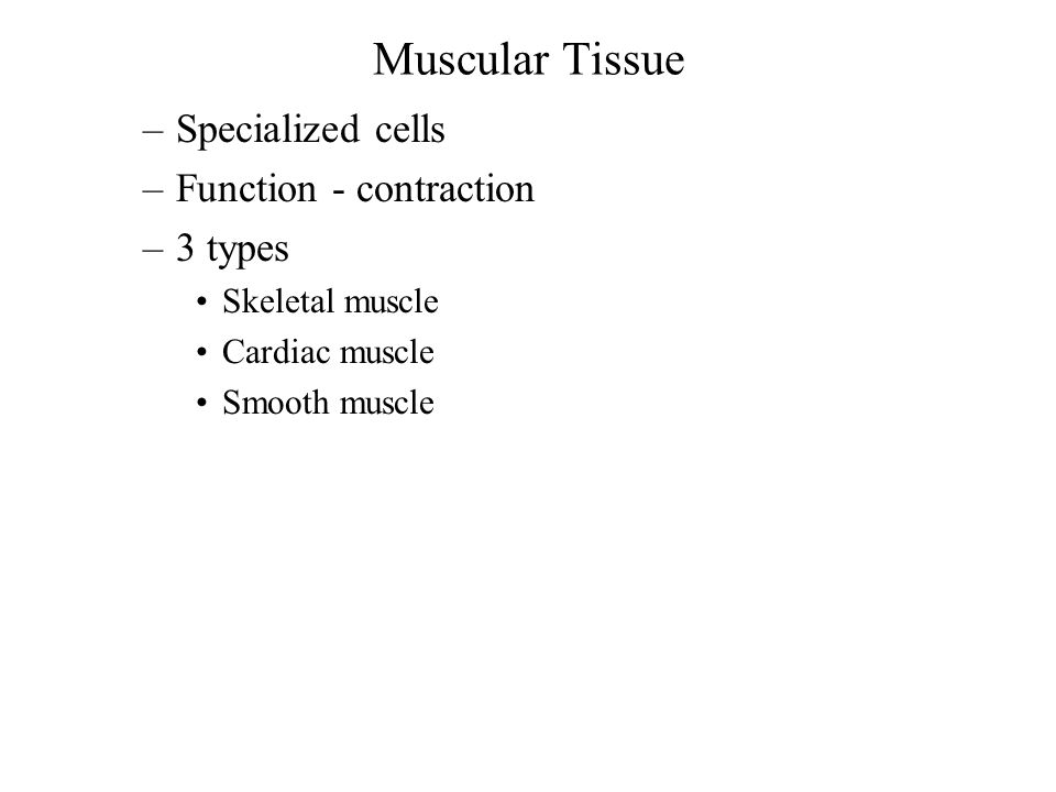 Muscular Tissue –Specialized cells –Function - contraction –3 types Skeletal muscle Cardiac muscle Smooth muscle