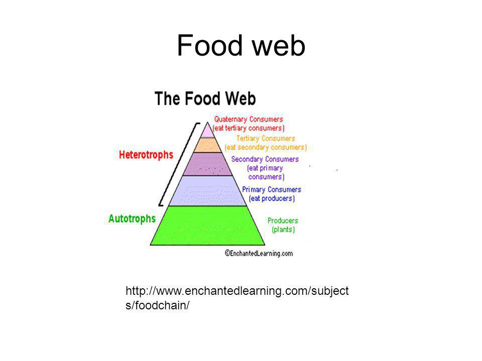 Food web http://www.enchantedlearning.com/subject s/foodchain/