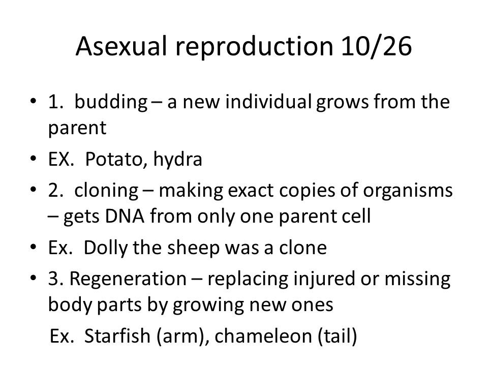 Asexual reproduction 10/26 1. budding – a new individual grows from the parent EX.