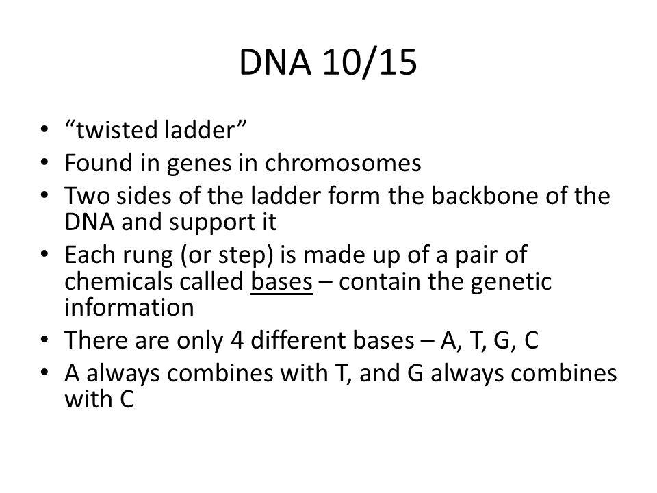 DNA 10/15 twisted ladder Found in genes in chromosomes Two sides of the ladder form the backbone of the DNA and support it Each rung (or step) is made up of a pair of chemicals called bases – contain the genetic information There are only 4 different bases – A, T, G, C A always combines with T, and G always combines with C
