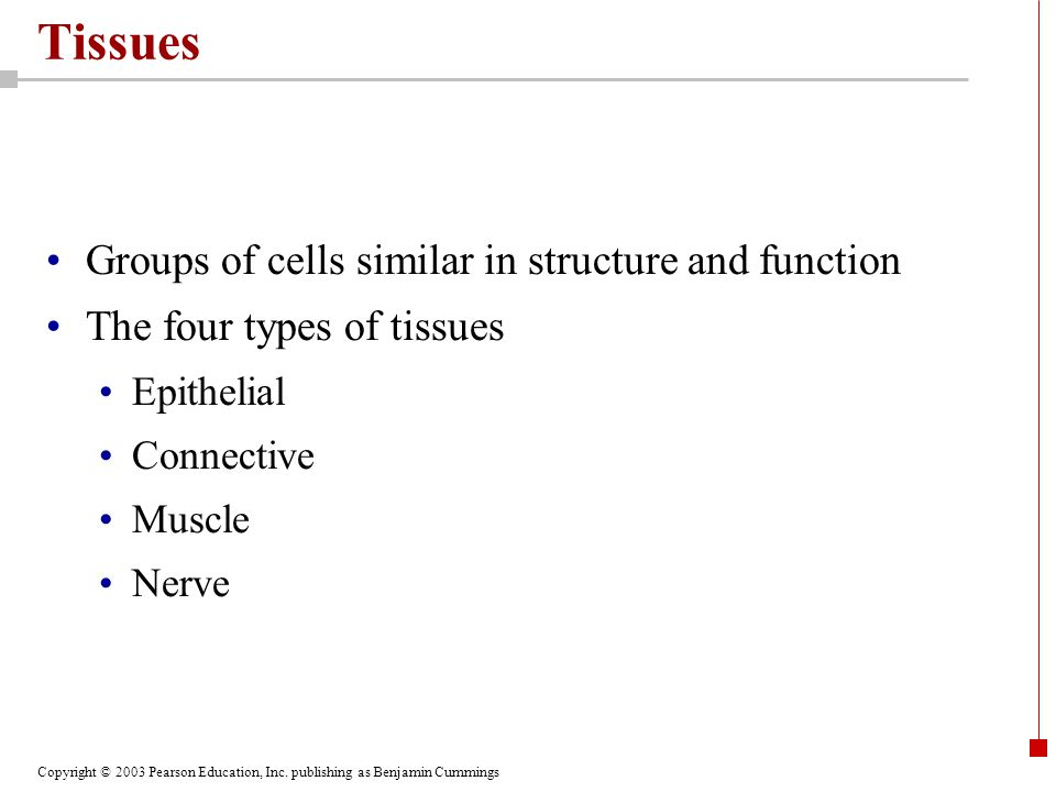 Copyright © 2003 Pearson Education, Inc. publishing as Benjamin Cummings Tissues Groups of cells similar in structure and function The four types of t