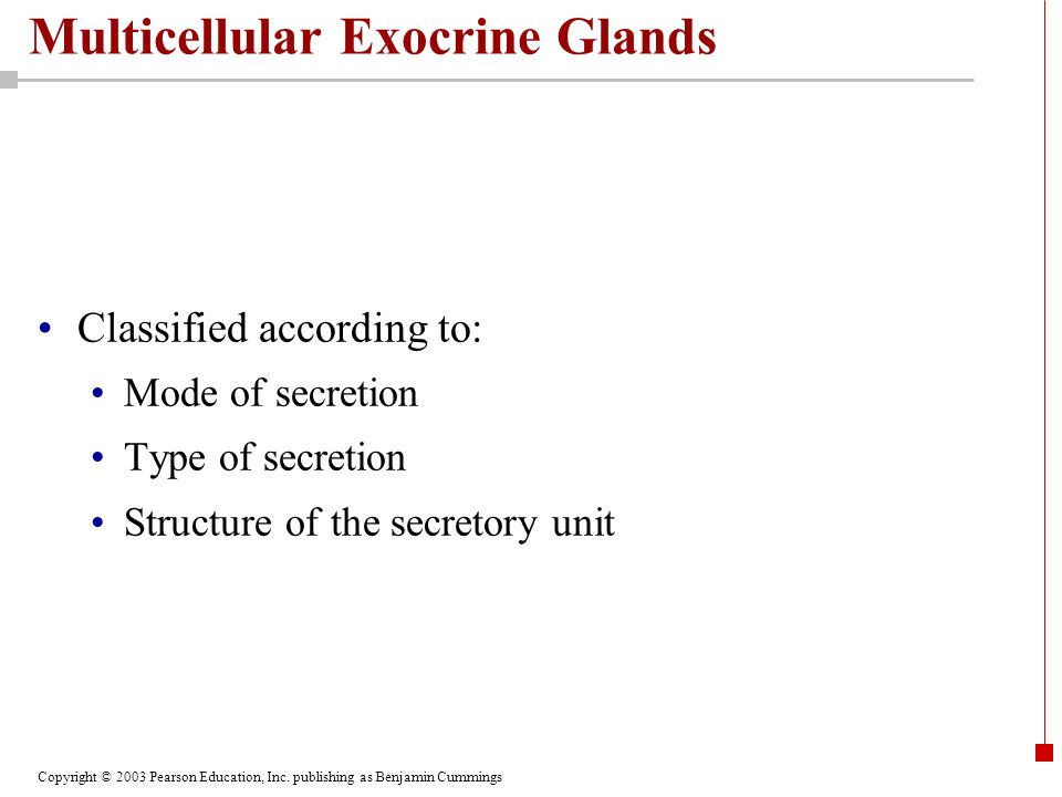 Copyright © 2003 Pearson Education, Inc. publishing as Benjamin Cummings Multicellular Exocrine Glands Classified according to: Mode of secretion Type