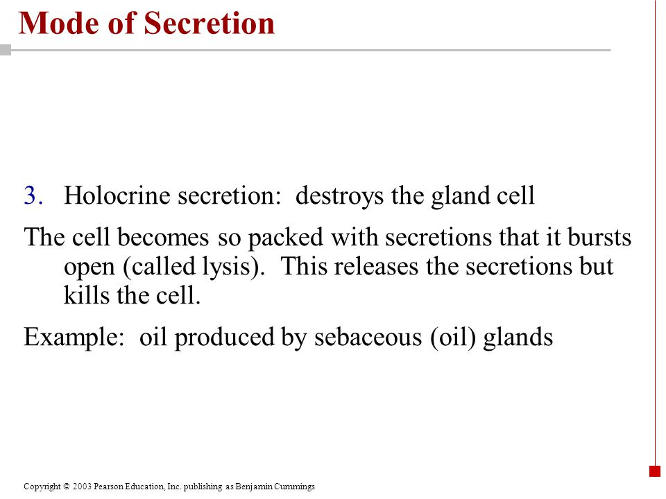 Copyright © 2003 Pearson Education, Inc. publishing as Benjamin Cummings Mode of Secretion 3.Holocrine secretion: destroys the gland cell The cell bec