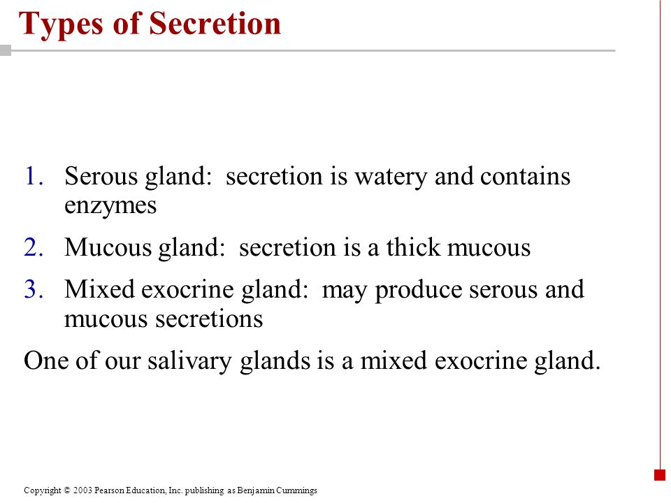 Copyright © 2003 Pearson Education, Inc. publishing as Benjamin Cummings Types of Secretion 1.Serous gland: secretion is watery and contains enzymes 2