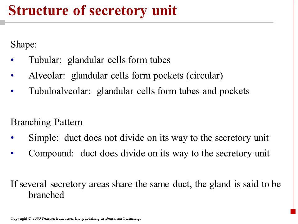 Copyright © 2003 Pearson Education, Inc. publishing as Benjamin Cummings Structure of secretory unit Shape: Tubular: glandular cells form tubes Alveol
