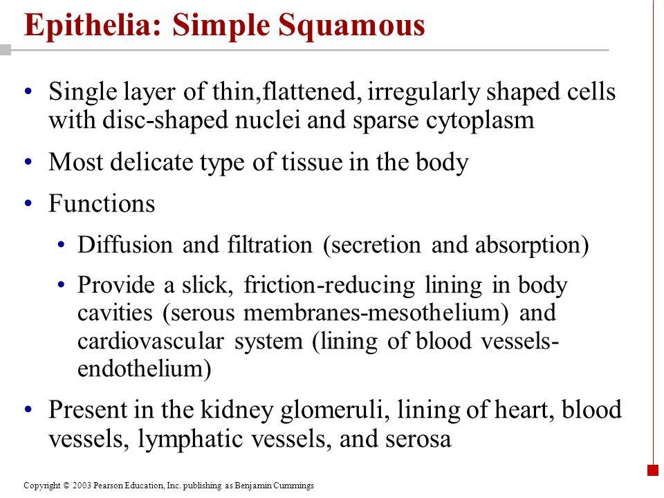 Copyright © 2003 Pearson Education, Inc. publishing as Benjamin Cummings Epithelia: Simple Squamous Single layer of thin,flattened, irregularly shaped