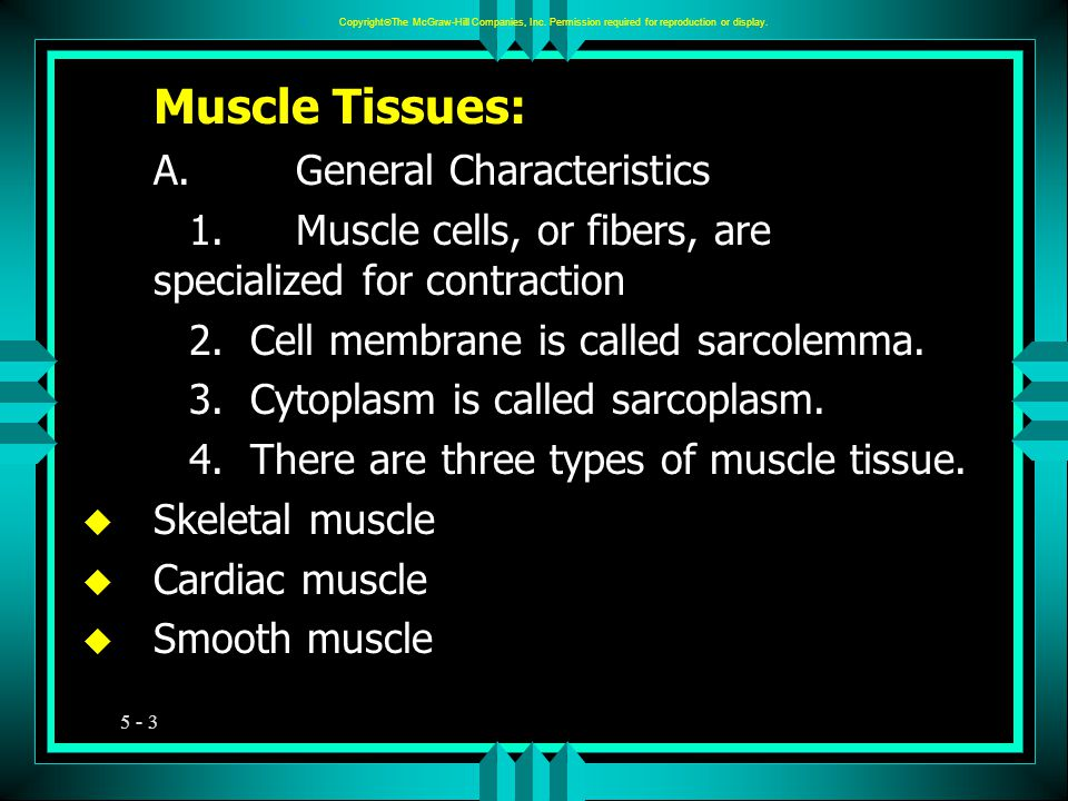 5 - 3 Muscle Tissues: A.General Characteristics 1.Muscle cells, or fibers, are specialized for contraction 2.