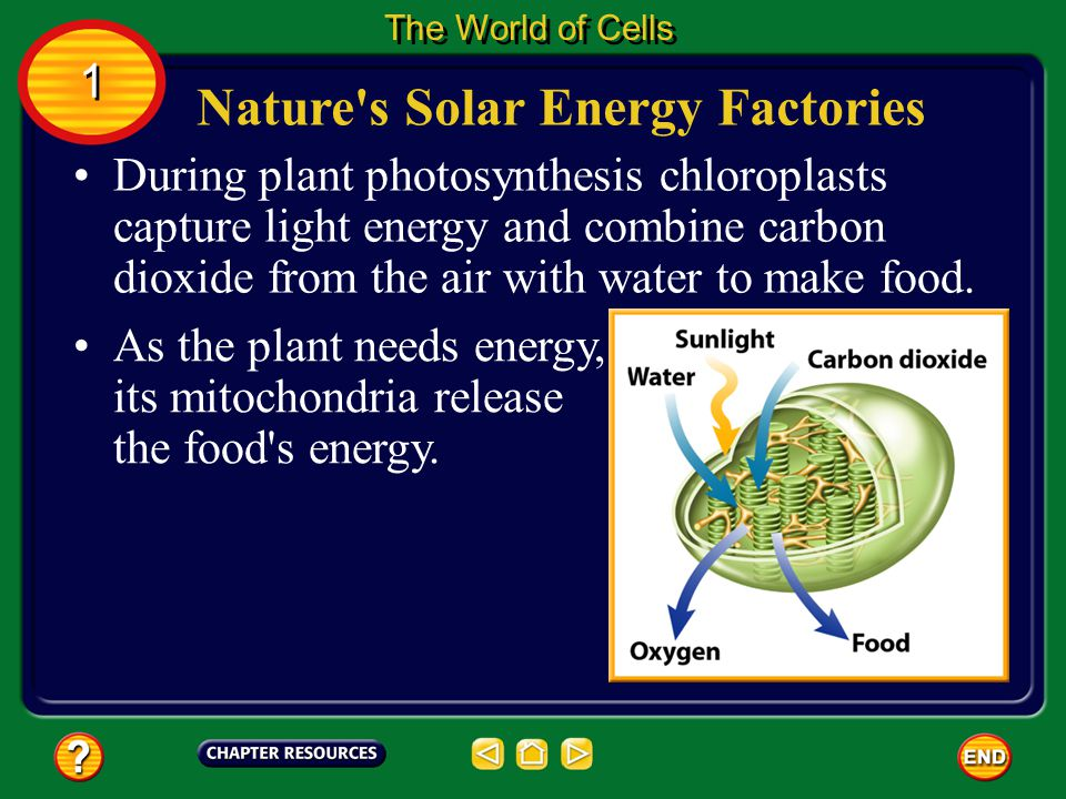 Nature s Solar Energy Factories The World of Cells 1 1 Animals obtain food from their surroundings.