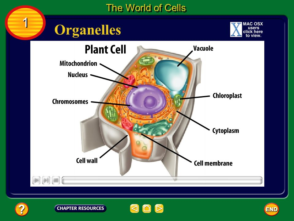 What are cells made of? The World of Cells 1 1