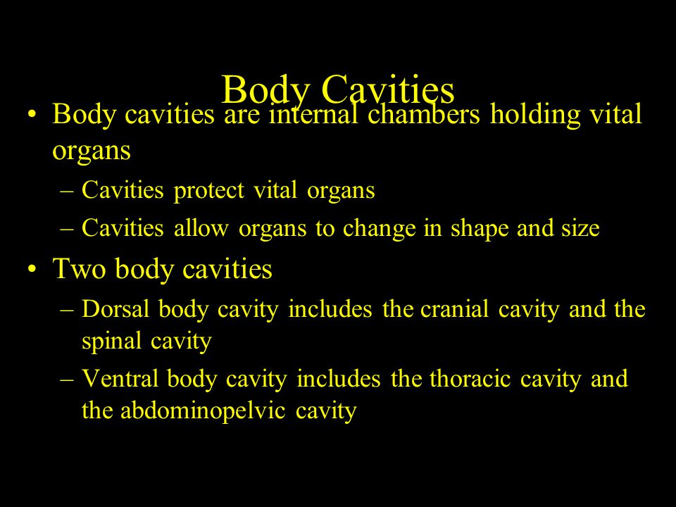 Body cavities are internal chambers holding vital organs –Cavities protect vital organs –Cavities allow organs to change in shape and size Two body cavities –Dorsal body cavity includes the cranial cavity and the spinal cavity –Ventral body cavity includes the thoracic cavity and the abdominopelvic cavity Body Cavities
