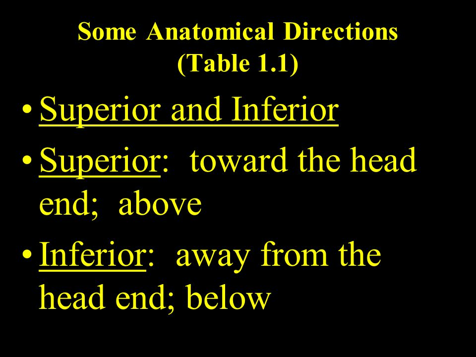 Some Anatomical Directions (Table 1.1) Superior and Inferior Superior: toward the head end; above Inferior: away from the head end; below