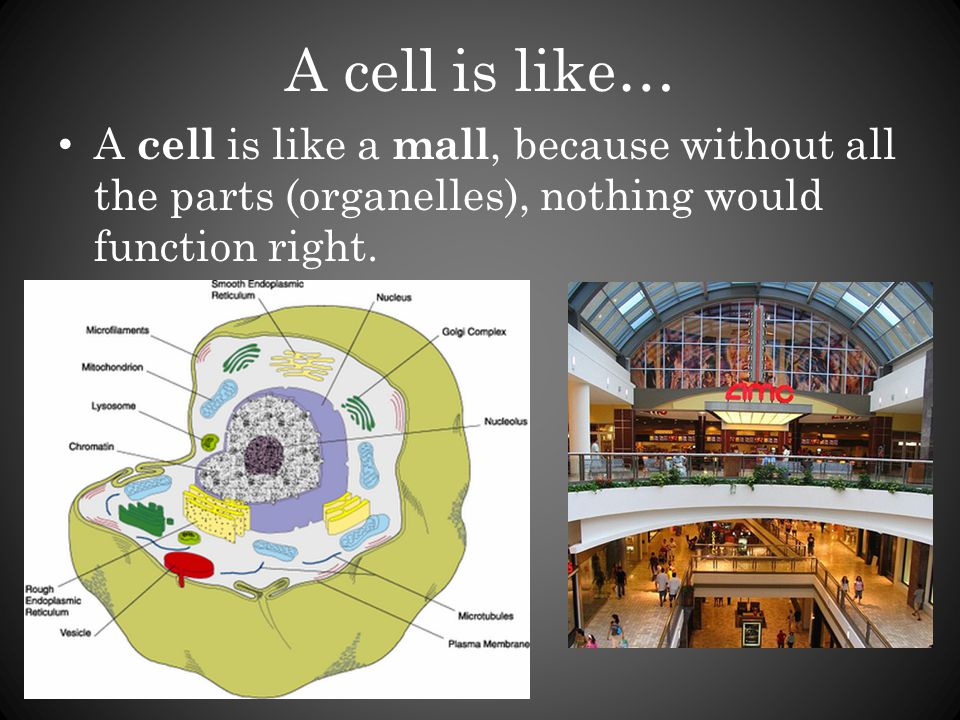 A cell is like… A cell is like a mall, because without all the parts (organelles), nothing would function right.
