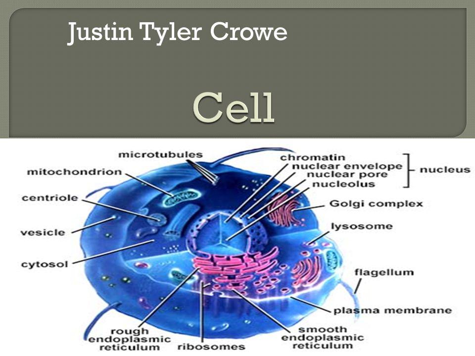 Justin Tyler Crowe