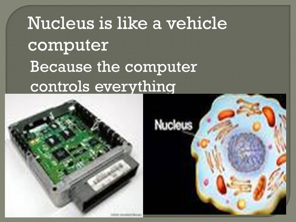 Nucleus is like a vehicle computer Because the computer controls everything