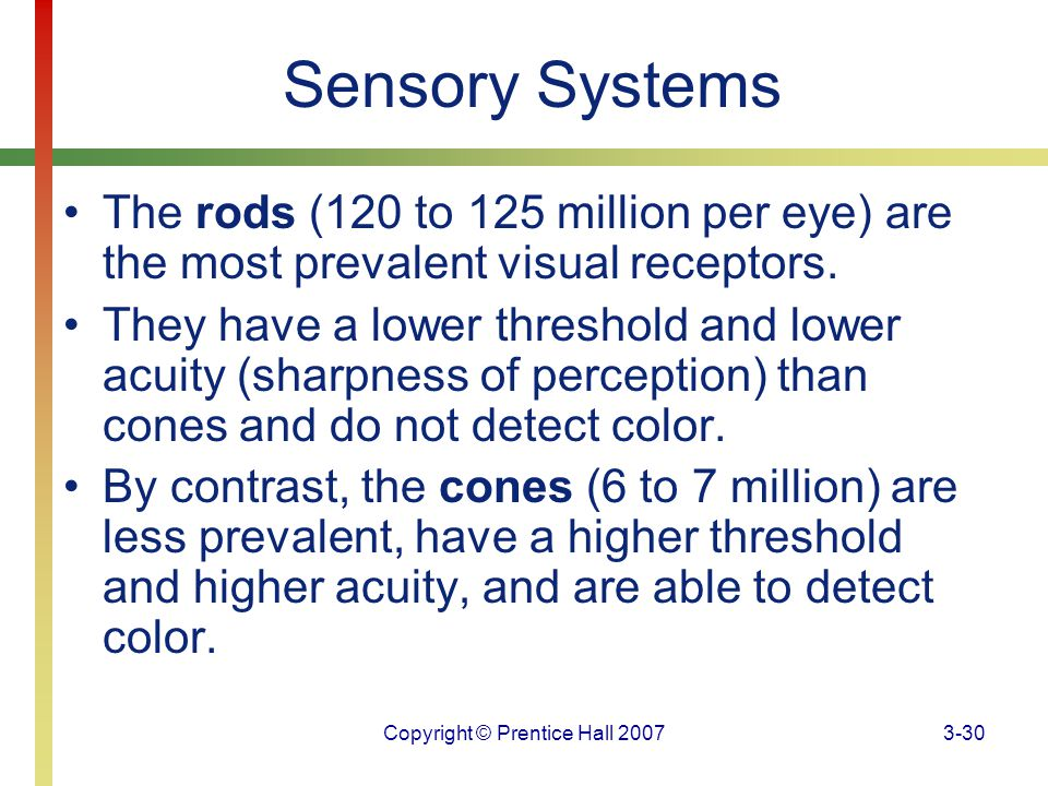 Copyright © Prentice Hall 20073-30 Sensory Systems The rods (120 to 125 million per eye) are the most prevalent visual receptors. They have a lower th