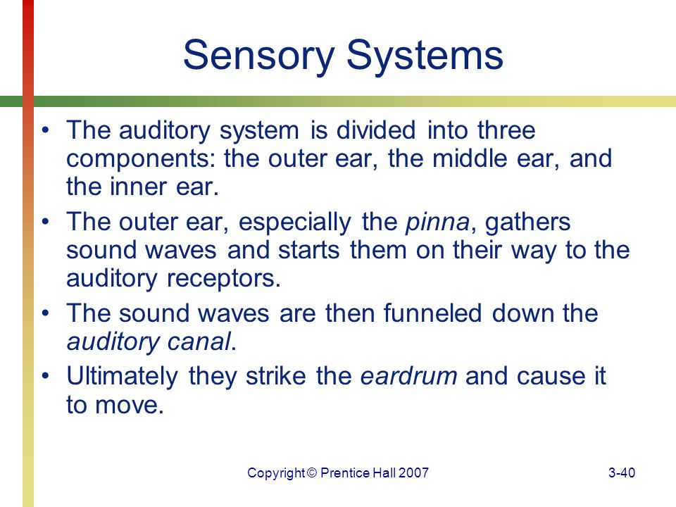 Copyright © Prentice Hall 20073-40 Sensory Systems The auditory system is divided into three components: the outer ear, the middle ear, and the inner