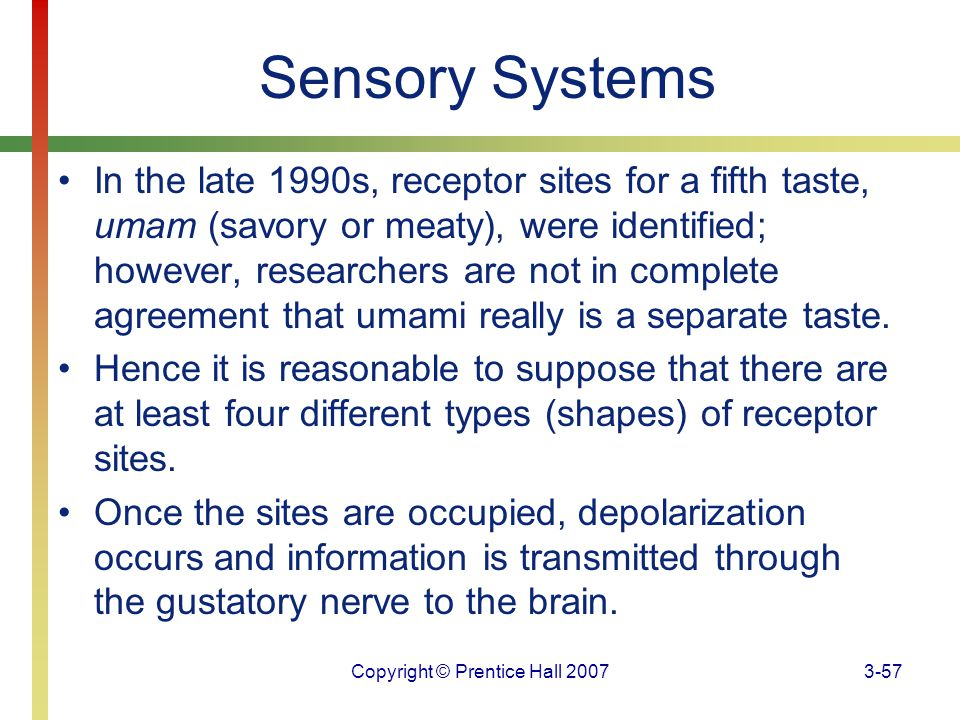 Copyright © Prentice Hall 20073-57 Sensory Systems In the late 1990s, receptor sites for a fifth taste, umam (savory or meaty), were identified; howev