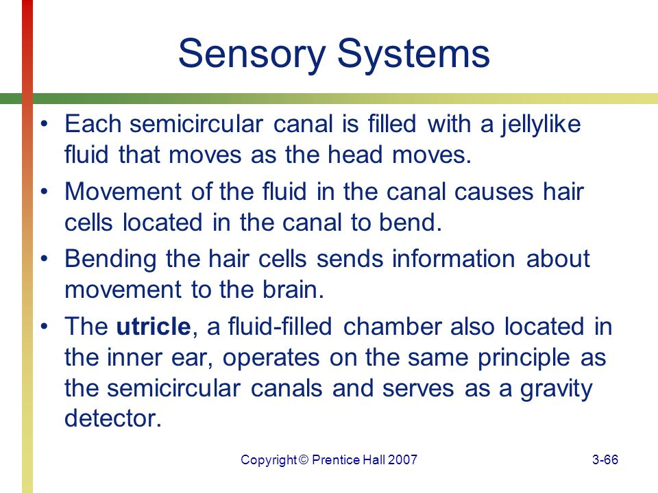 Copyright © Prentice Hall 20073-66 Sensory Systems Each semicircular canal is filled with a jellylike fluid that moves as the head moves. Movement of