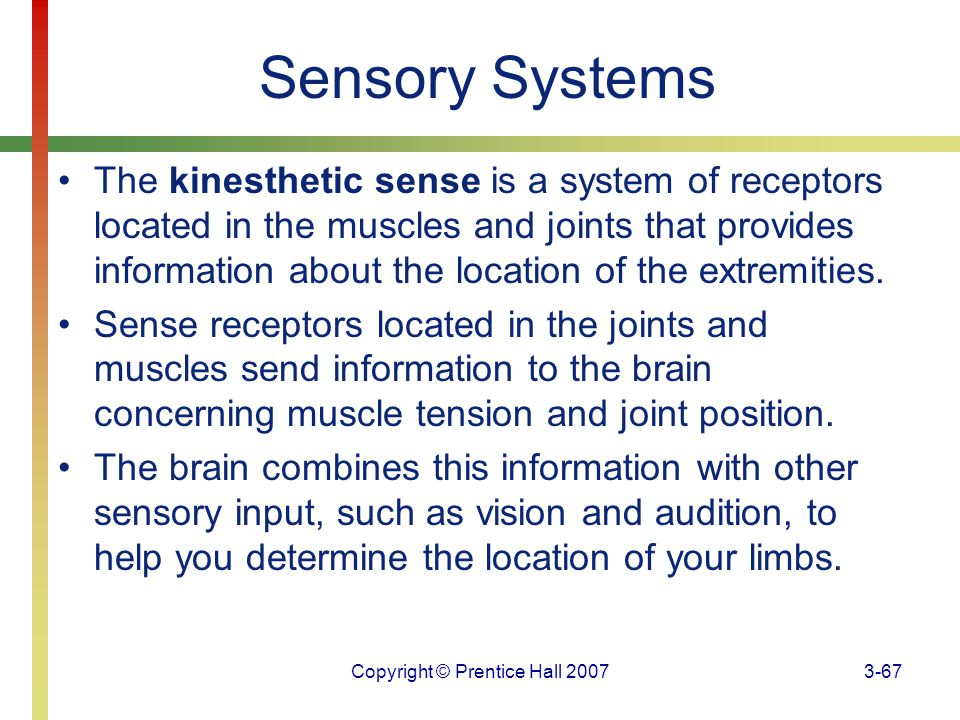 Copyright © Prentice Hall 20073-67 Sensory Systems The kinesthetic sense is a system of receptors located in the muscles and joints that provides info