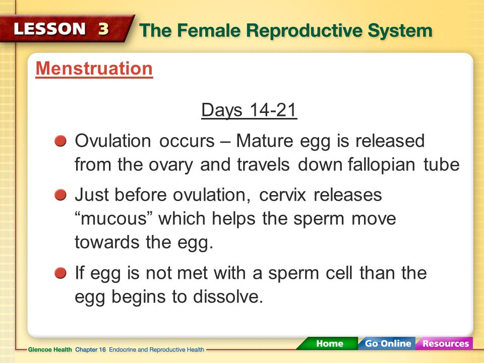 Menstruation Days 9-13 The hormones FSH & LH signal: - an egg to mature - the uterus to get ready to receive a new egg: the lining (endometrium) start