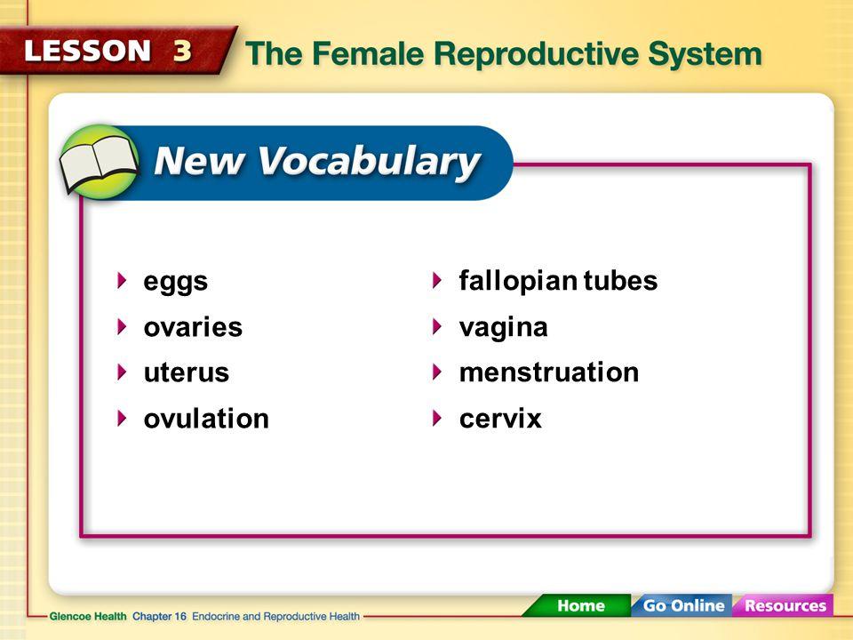 eggs ovaries uterus ovulation fallopian tubes vagina menstruation cervix