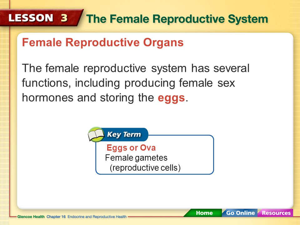 Female Reproductive Organs The organs of the female reproductive system enable pregnancy to occur with the first monthly ovulation. The female reprodu