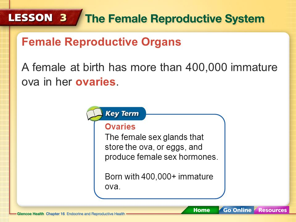 Female Reproductive Organs A female at birth has more than 400,000 immature ova in her ovaries.